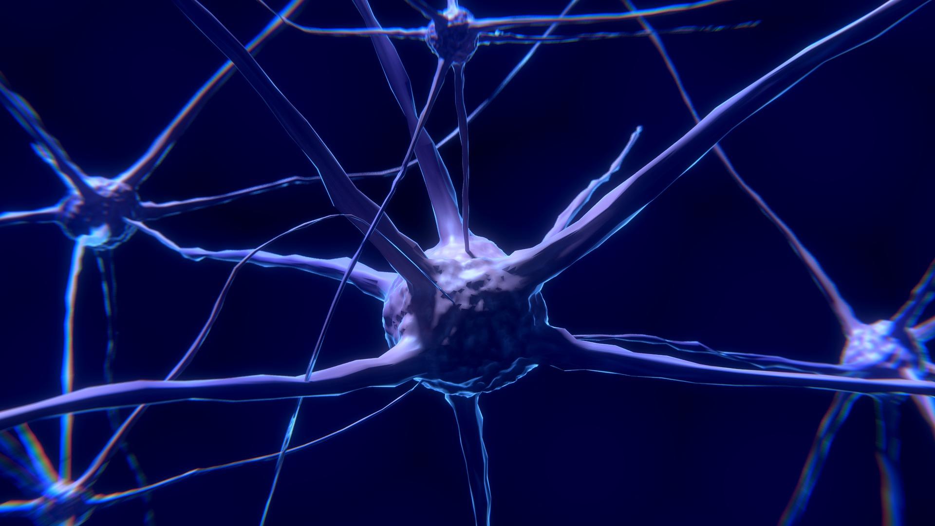 agy egészsége