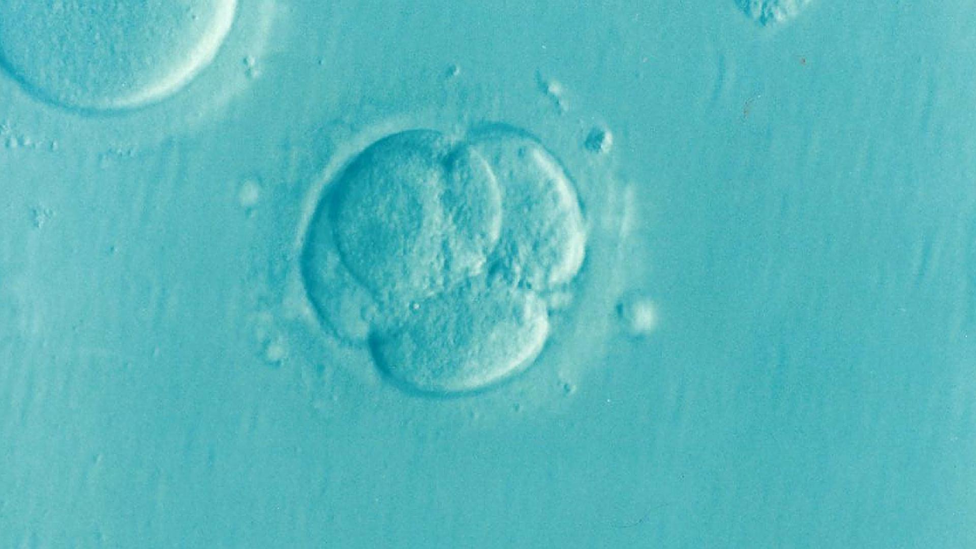 embrio-ivf